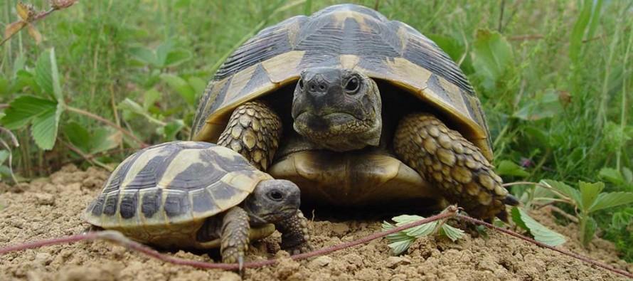 Ученици ще бъдат обучени как да пазят костенурките