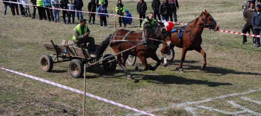 Най-издръжливите на бой коне станаха първи на състезание в Харманли