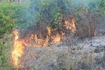 Над 3 000 декара са засегнати от пожара в Сакар