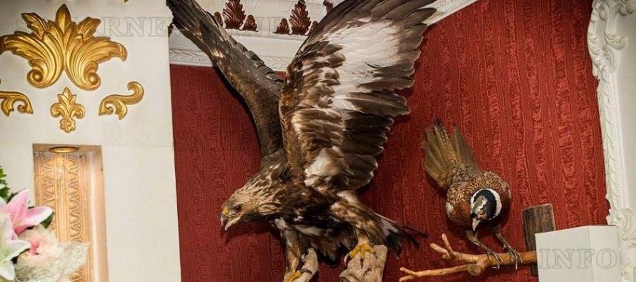 Заради препариран морски орел ресторантьор отива на съд