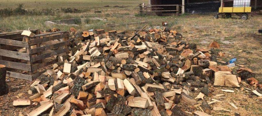 Близо 13 кубика незаконна дървесина задържаха служители на ЮИДП –  Сливен