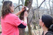 Студенти – еколози на доброволна бригада Маджарово
