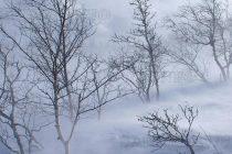 Малко сняг – много проблеми
